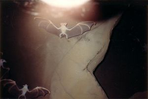 New bat virus related to deadly Hendra discovered
